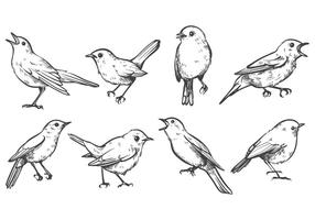 Vetores Free Nightingale
