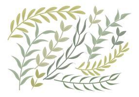 Conjunto de galhos verdes do vetor