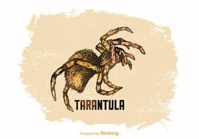 Tarantula desenhada de vetores grátis