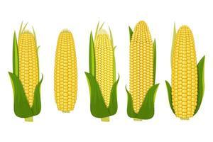 vetor de milho no fundo branco