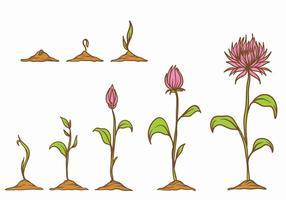 Crescer conjunto de plantas vetor
