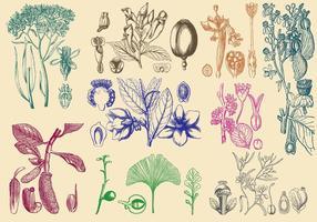 Plantas de estilo antigo vetor