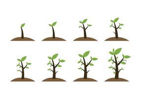 Ícones de plantas de crescimento grátis vetor