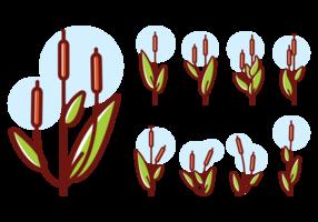 Cattails ícones Vector