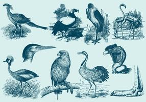 Desenhos de grandes pássaros vetor