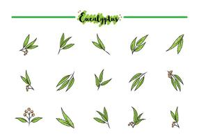Ícones gratuitos de eucalipto vetor