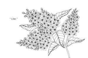folhas e flor lilás botânica desenhada de mão vetor