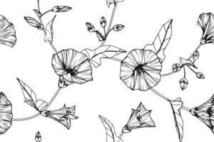 folhas e flor de glória da manhã de mão desenhada padrão sem emenda vetor