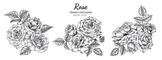 mão desenhada rosas botânicas vetor