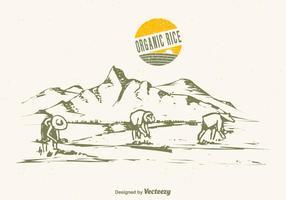 Ilustração do vetor do campo de arroz desenhado grátis