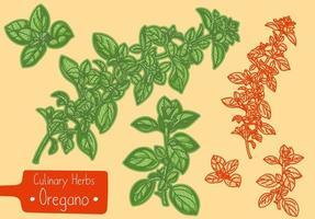 ramos de orégano erva culinária vetor