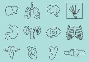 Ícones de ossos e órgãos