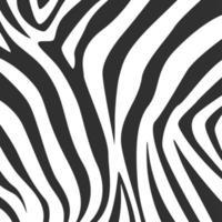 padrão de impressão de zebra preto e branco vetor
