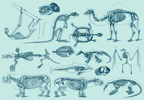 Esqueletos de animais vintage vetor