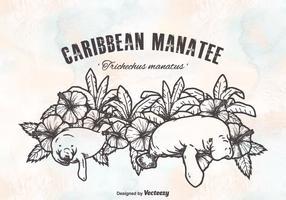 Desenho de vetores grátis do Manatees do Caribe
