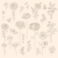 conjunto botânico floral de mão desenhada