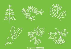 Vector de ervas medicinais desenhadas à mão