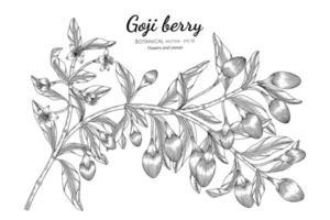 mão desenhada goji berry fruit vetor