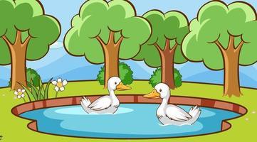 cena com patos na lagoa vetor