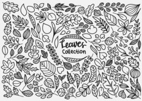 folhas doodle coleção vetor