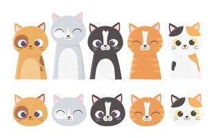 rostos de gatos variados vetor