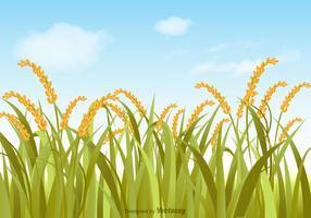 Ilustração gratuita do campo de arroz vetorial vetor