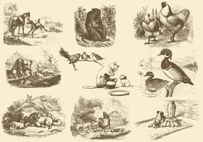Ilustrações da mãe animal vetor