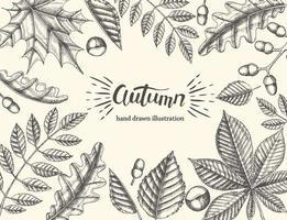 lindas folhas de outono em um fundo claro vetor