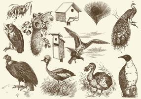Ilustrações de pássaros e ninhos