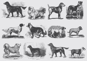 Ilustrações do cão cinzento do vintage vetor