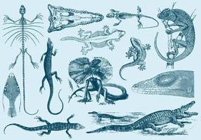 Ilustrações do lagarto vintage