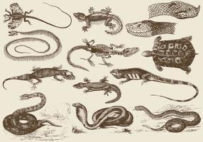 Ilustrações Reptile vetor