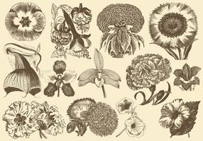 Flores exóticas vintage vetor