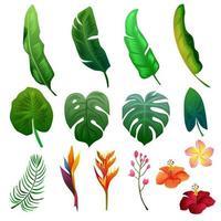 folhagem de verão tropical conjunto de objetos de clipart vetor
