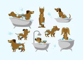 Vector de lavagem de cachorro grátis