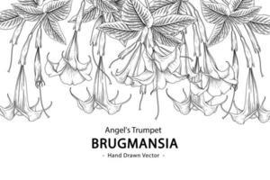 flor de trombeta de anjo ou brugmansia isolada no fundo branco vetor