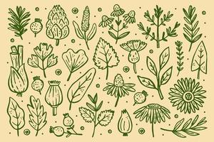 conjunto de plantas florestais vetor