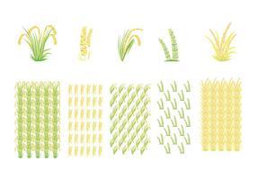 Vetores do campo de arroz e do arroz
