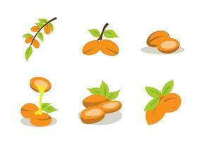 Pacote de vetores a cores de óleo de frutas de argan