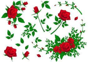 conjunto de rosas vermelhas vetor