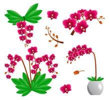 conjunto de flores de orquídea vetor