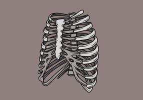 Ilustração de Ribcage vetor
