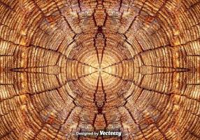 Anéis de árvore realistas fecham-se acima do fundo vetor