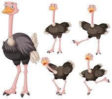 conjunto de personagem de desenho animado de avestruz fofo vetor
