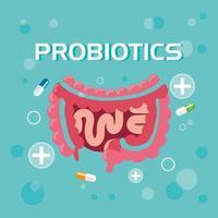 probióticos sistema digestivo com cápsulas vetor