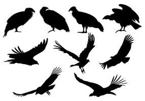 Conjunto de Silhuetas do Condor vetor