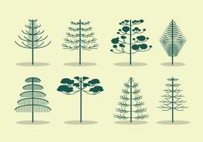 Vector de árvore de Araucária grátis