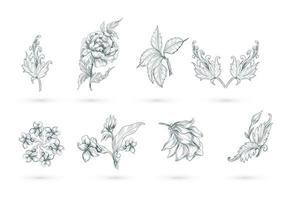 conjunto floral artístico abstrato vetor