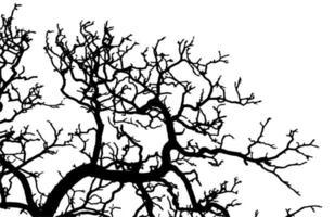 silhueta da árvore do galho vetor