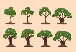 Ilustração da árvore de manga